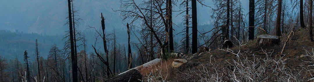 PG&E camp fire
